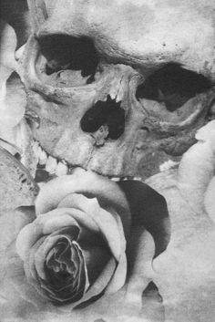 Skull and rose  http://www.creativeboysclub.com/