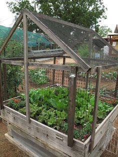 Garden ~ Pest Free!