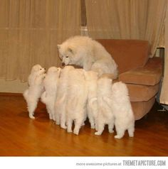 Mom, mom, mom, mom, mom!