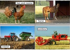 Primary Teaching Resources - On the Farm topic. Worksheets, colouring pages, alphabet frieze, vocabulary cards and posters for topic about Farms.