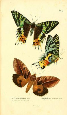 Butterflies Faune entomologique de Madagascar, Bourbon et Maurice : Paris : A la Librairie Encyclopédique de Roret ...,1833