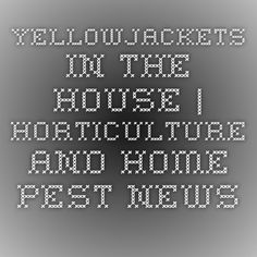 Yellowjackets in the House | Horticulture and Home Pest News