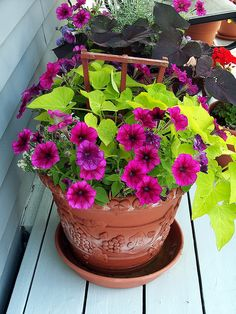 potted flowers on a budget!