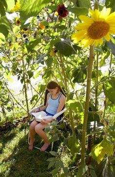 playhous, plant, sunflow hous, garden, kid