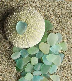 urchin shell and sea glass