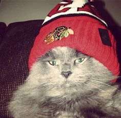 Too much #Blackhawks swag for one cat.