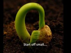 Seeds and Plants Music Video - YouTube ~ Lots of opportunities to pause and explain the growth and parts of plants...