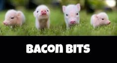 love them bacon bits