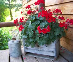 Antique New York Mills Bottling Co.crate with red geranium and antique oil can