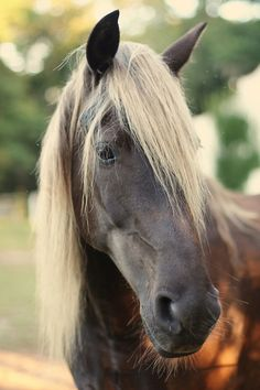 horses, color, blondes, rocky mountains, beauty