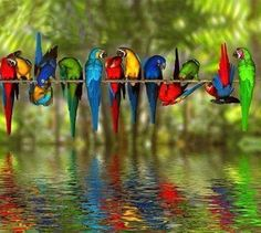 Parrots all in a line