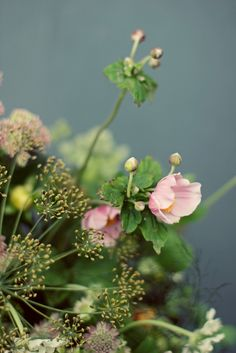 Autumn anemones (different from the spring anemones that are so popular in wedding bouquets, but just as lovely)