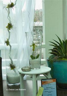 air plant ideas