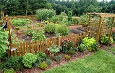 More for the pic than the article. need to fence in my garden to keep the critters out.