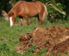 With good management, you can turn manure from a liability to an asset.