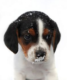 First winter - so cute! #puppies #dogs #cute #animals