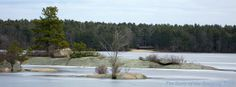 Deer Cove on #Yawgoog Pond in winter; on the Narragansett and Yellow trails in Rockville, Hopkinton, Rhode Island (RI).  A 2013 image by David R. Brierley.