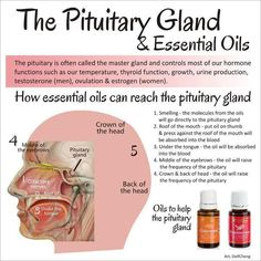 Can you see how essential oils like Frankincense and Cedarwood that can cross the blood brain barrier and reach the pituitary and pineal glands can effect changes in and help restore balance to the entire body?
