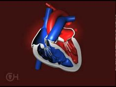 How a Normal Heart Pumps Blood