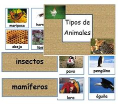 Types of Animals - Classifying - Spanish
