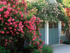 Make a bold statement by planting in profusion.