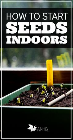Who is ready to start planting? Learn how to start seeds indoors for awesome results in your garden later.