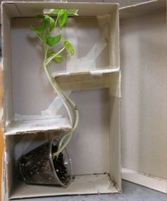 plant maze: plants grow toward the light; this experiment would be be fun to take to extremes!