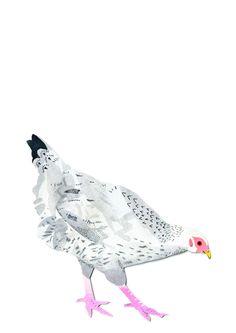 Chicken - Daisy Tempest