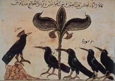 raven, crow art, 1210, the crow, black bird, dimna, crows, corvida, blackbird sing