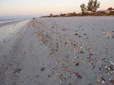 lots of shells at dawn 2-28-2010