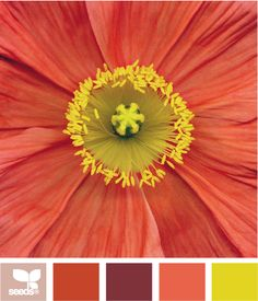 Macro Color by Design Seeds