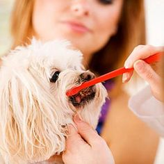 How To Take Care Of Your Dogs Teeth