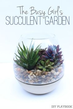 The Busy Girl's DIY Succulent Garden via @diyplaybook. NO Maintenance Required!