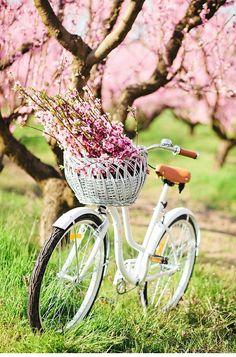 ♔ Cherry blossom
