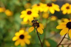 smithsonian garden, bee, habitat garden, butterfli habitat