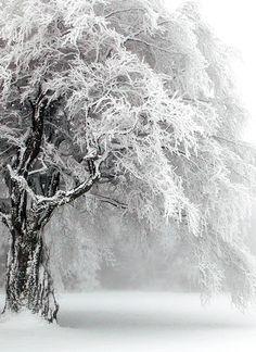 gorgeous snow scene