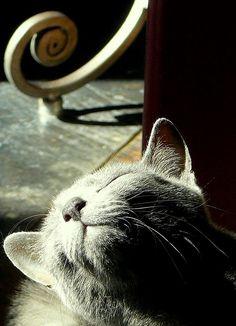 Sun on my Face :)