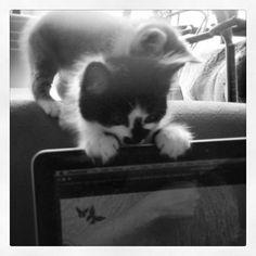 Cheeky little kitty! precious pet