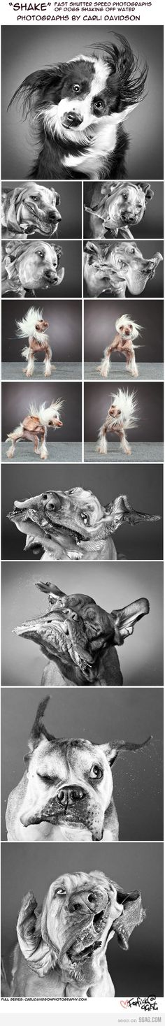 dont ask me why but i really kinda like this!  too funny i want a puppy