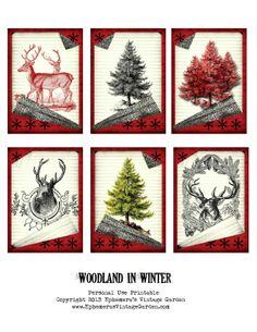 WoodlandInWinter.jpg (1237×1600)
