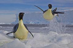 Penguin Party via SGP