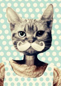 cats, cat art, polka dots, kitten, retro art, art prints, moustaches, kitty, cat lady