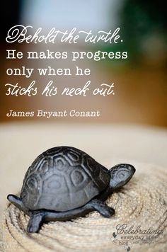 {be inspired} Behold the Turtle quote