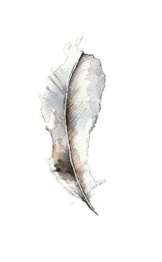 another pretty feather watercolor...can i have one in each room?