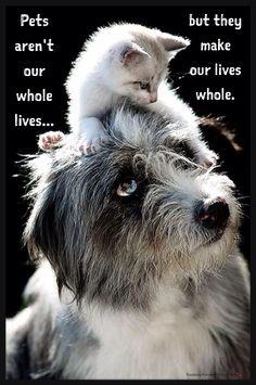 Animal Quotes: Pets aren't our whole lives but they make our lives whole! ❤ animal quotes, anim quot, pet