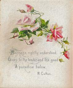 N. Cotton