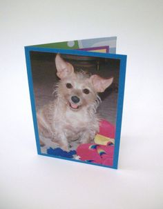 Humorous Blank Card Dog Photograph All Occasion by Lillyzcardz, $4.00