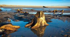 A submerged forest in Borth - Walking the new Wales coastal path (BBC)