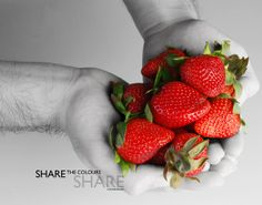 Still Life Photography | Color Splash by Veronica Chuah, via Behance