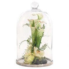bell jars, faux, plants, glass, natur decor, pitcher plant, decorations, cream, plant protea